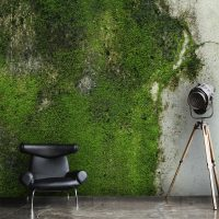 Wallpaper, Concrete & Moss, Industrial Wall Art, Peel and Stick,  Large Photo, Vinyl, Self Adhesive, Wall Mural